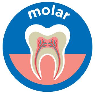 molar root canal costs aspen dental